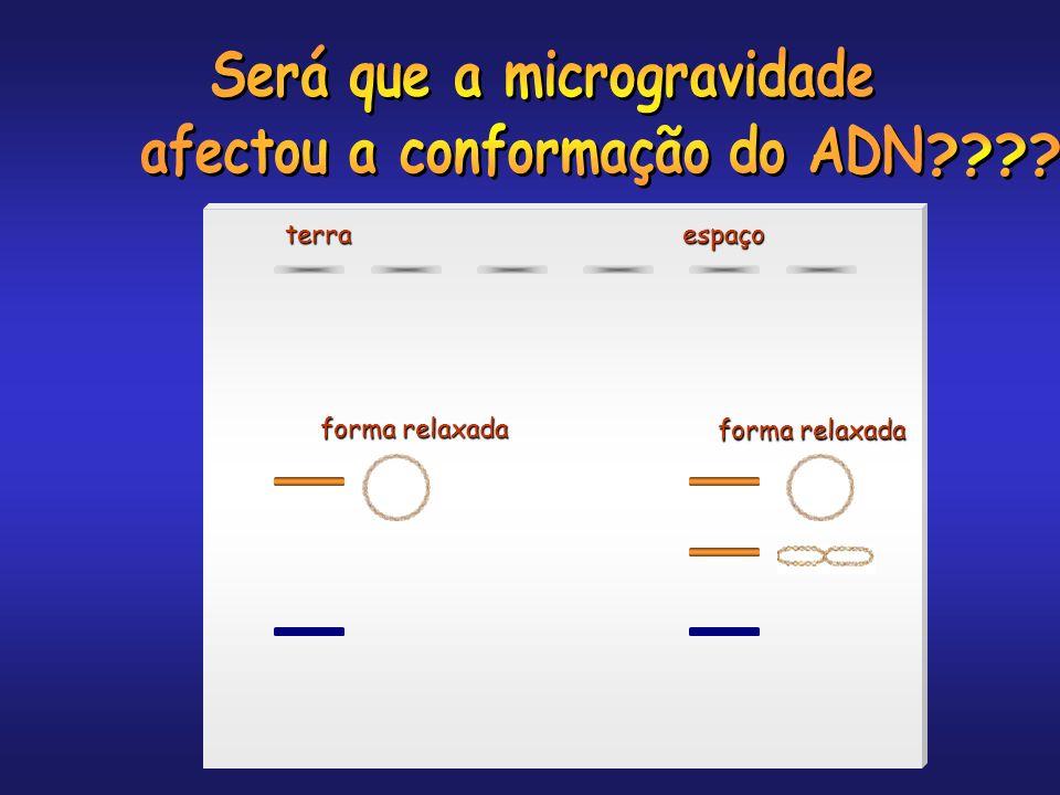 Será que a microgravidade afectou a conformação do ADN