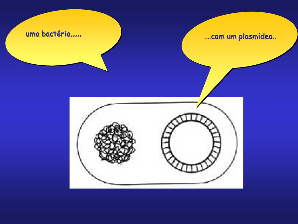 uma bactéria...... .…com um plasmídeo..