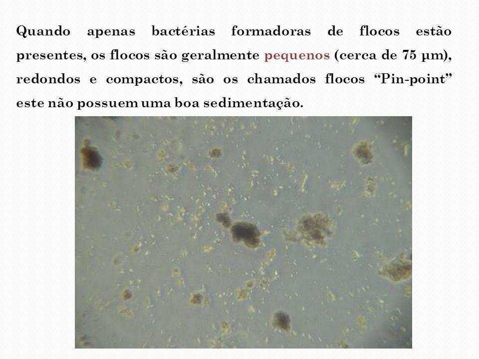 Quando apenas bactérias formadoras de flocos estão presentes, os flocos são geralmente pequenos (cerca de 75 μm), redondos e compactos, são os chamados flocos Pin-point este não possuem uma boa sedimentação.