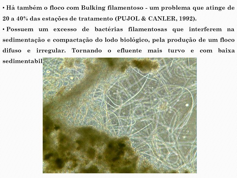 Há também o floco com Bulking filamentoso - um problema que atinge de 20 a 40% das estações de tratamento (PUJOL & CANLER, 1992).