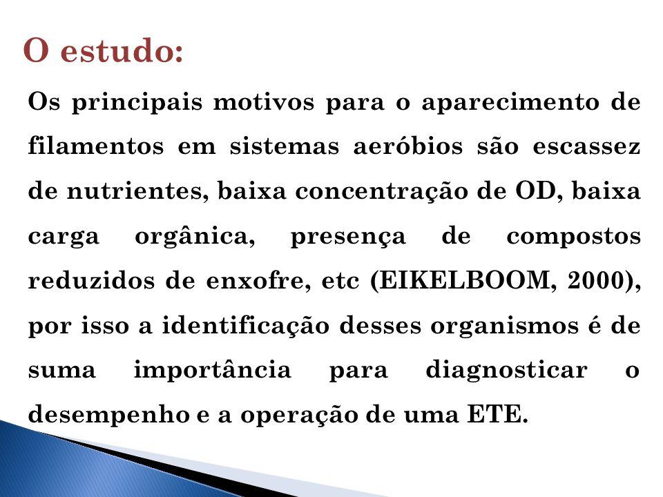 O estudo: