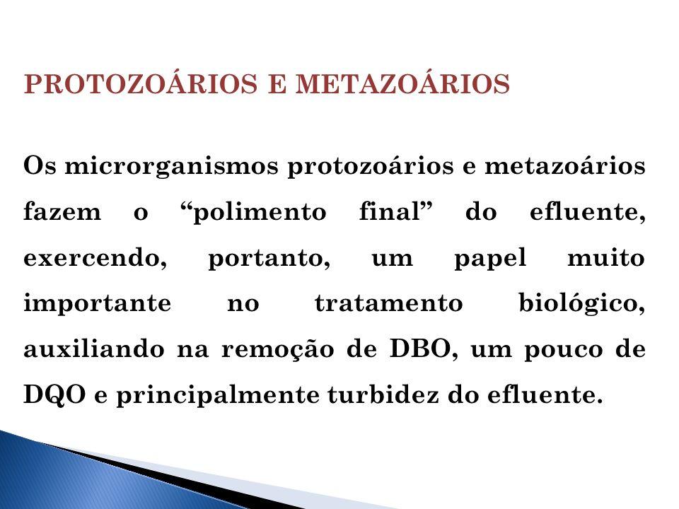 PROTOZOÁRIOS E METAZOÁRIOS
