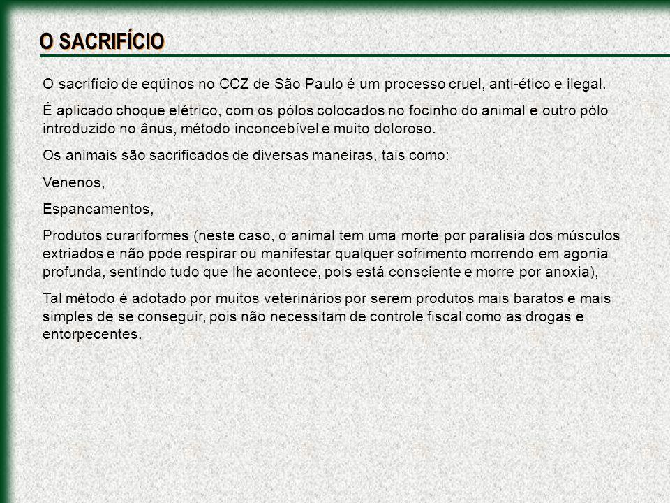 O SACRIFÍCIO O sacrifício de eqüinos no CCZ de São Paulo é um processo cruel, anti-ético e ilegal.