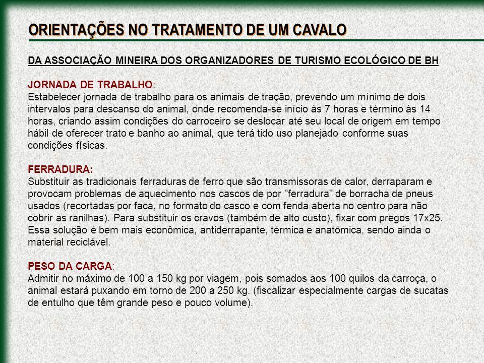 ORIENTAÇÕES NO TRATAMENTO DE UM CAVALO