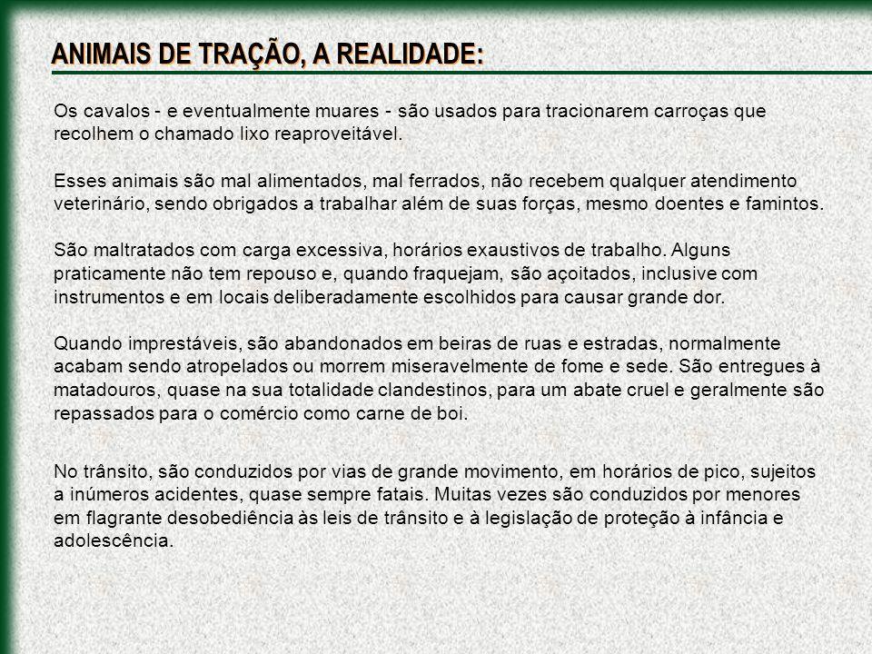 ANIMAIS DE TRAÇÃO, A REALIDADE: