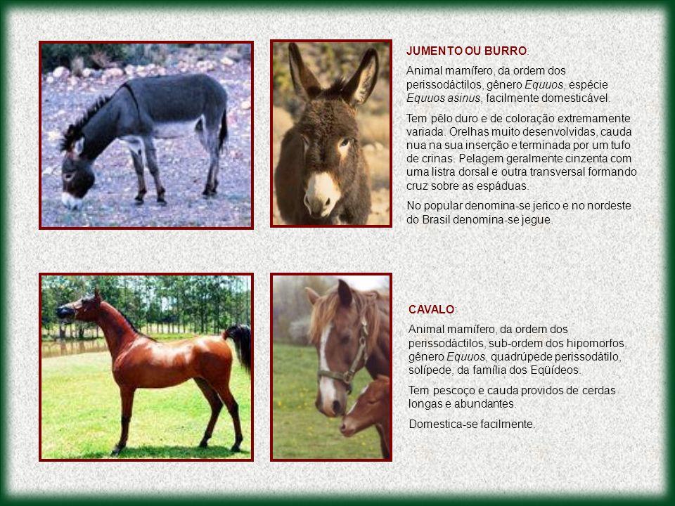 JUMENTO OU BURRO: Animal mamífero, da ordem dos perissodáctilos, gênero Equuos, espécie Equuos asinus, facilmente domesticável.