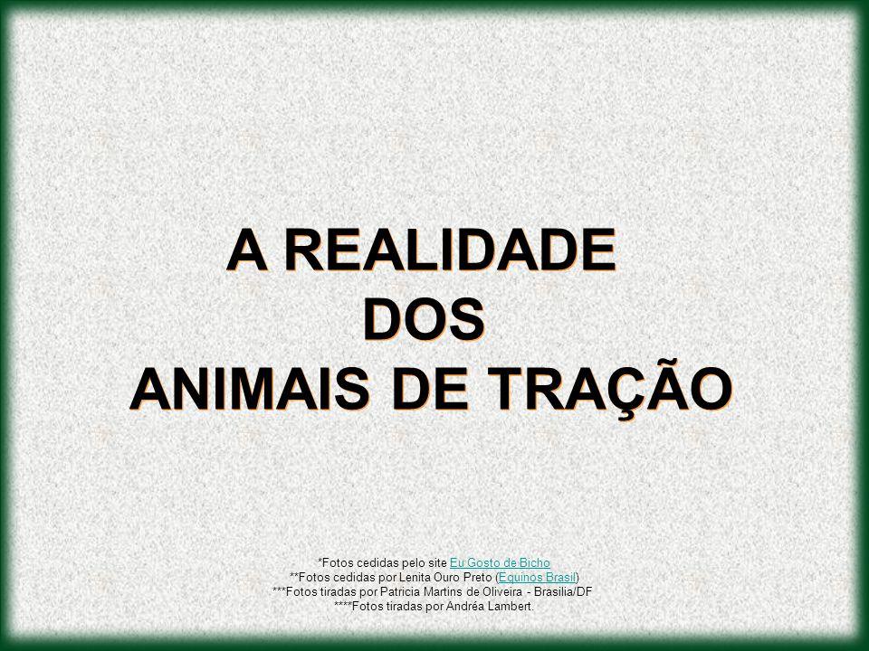 A REALIDADE DOS ANIMAIS DE TRAÇÃO