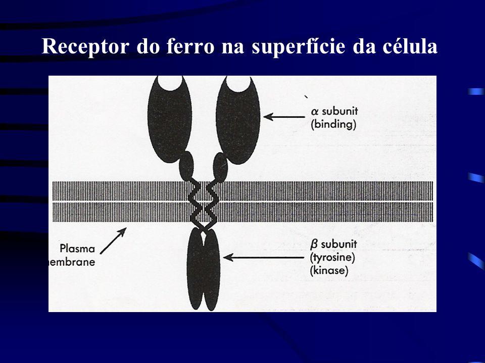 Receptor do ferro na superfície da célula