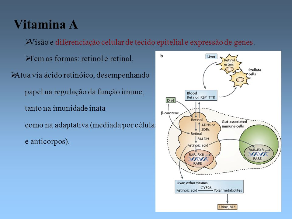 Vitamina A Visão e diferenciação celular de tecido epitelial e expressão de genes. Tem as formas: retinol e retinal.