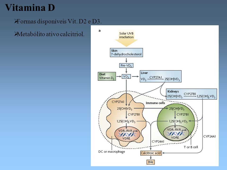 Vitamina D Formas disponíveis Vit. D2 e D3.