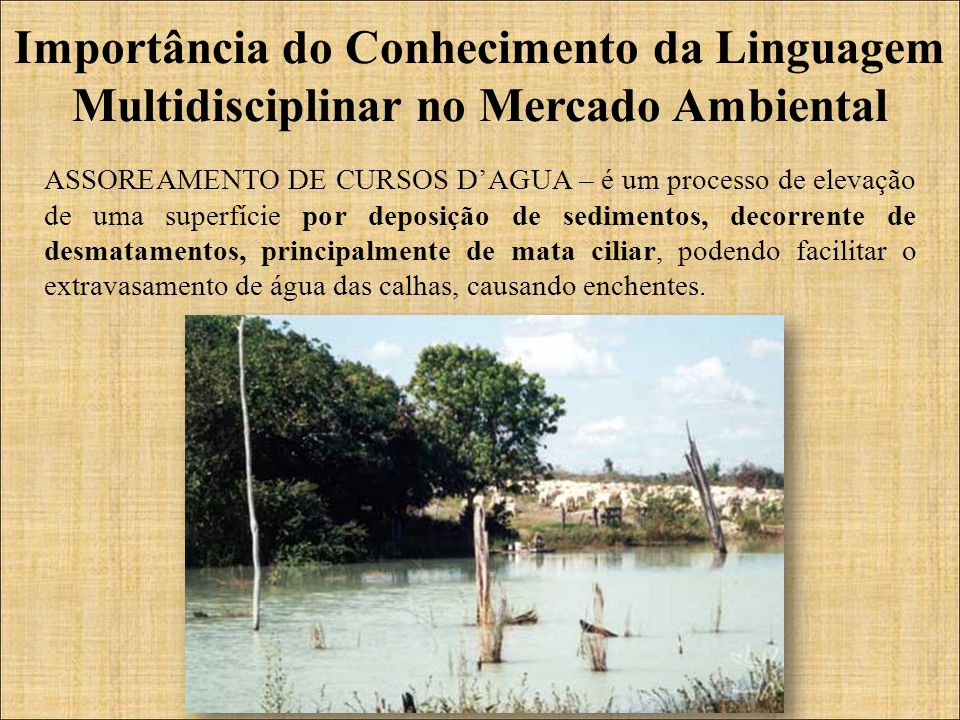 Importância do Conhecimento da Linguagem Multidisciplinar no Mercado Ambiental