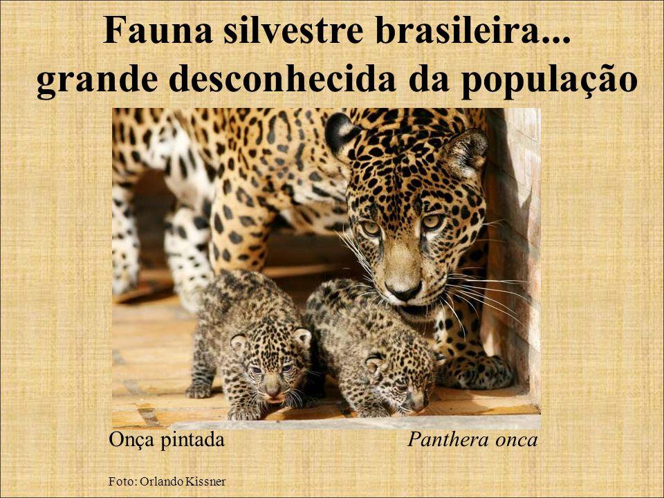 Fauna silvestre brasileira... grande desconhecida da população