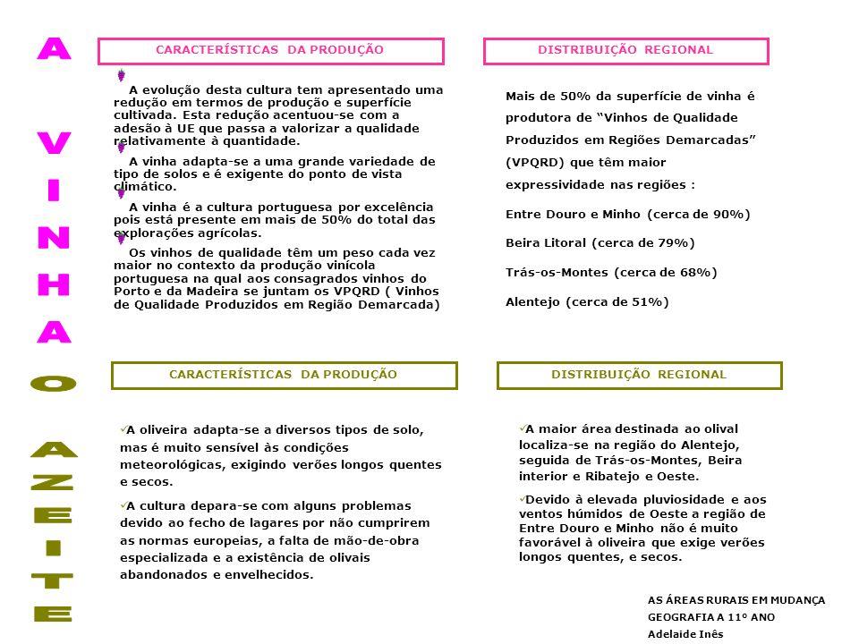 A VINHA O AZEITE CARACTERÍSTICAS DA PRODUÇÃO DISTRIBUIÇÃO REGIONAL