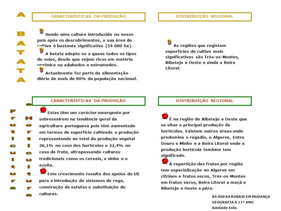 A BATATA Fruticultura e Horticultura CARACTERÍSTICAS DA PRODUÇÃO