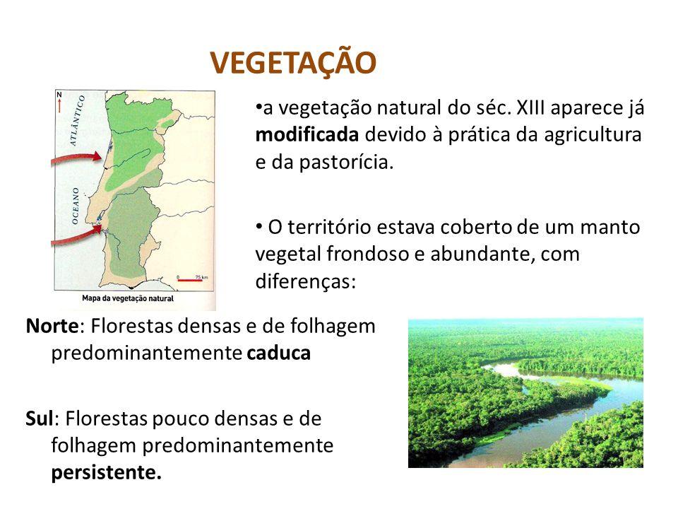 VEGETAÇÃO a vegetação natural do séc. XIII aparece já modificada devido à prática da agricultura e da pastorícia.