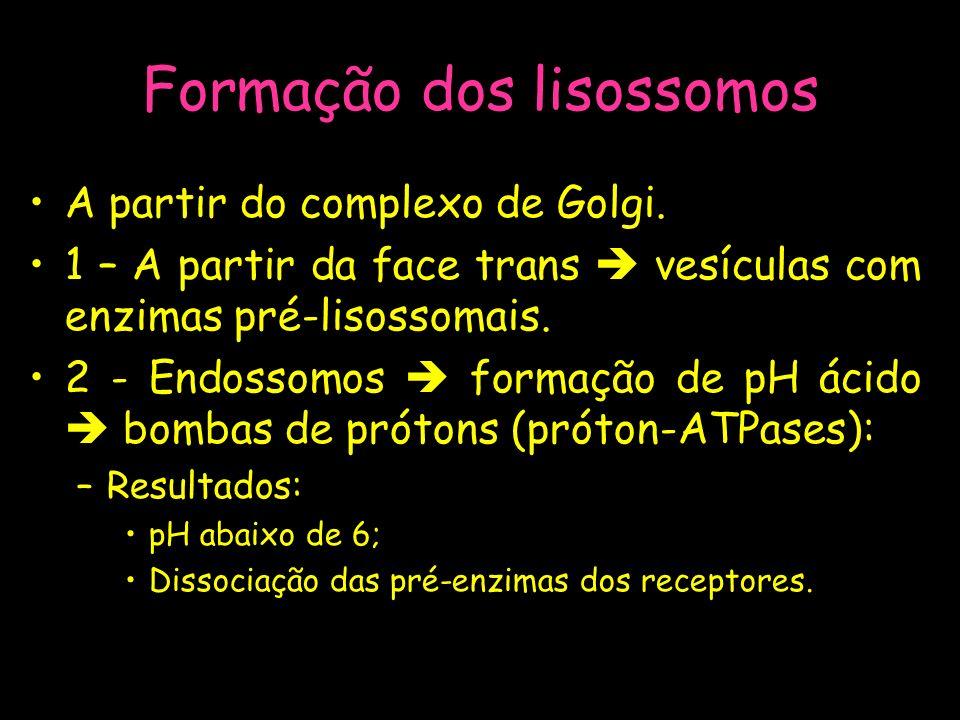 Formação dos lisossomos