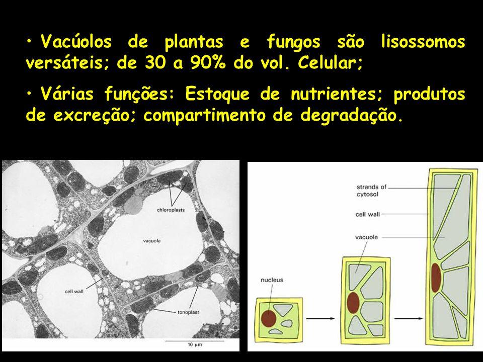 Vacúolos de plantas e fungos são lisossomos versáteis; de 30 a 90% do vol. Celular;