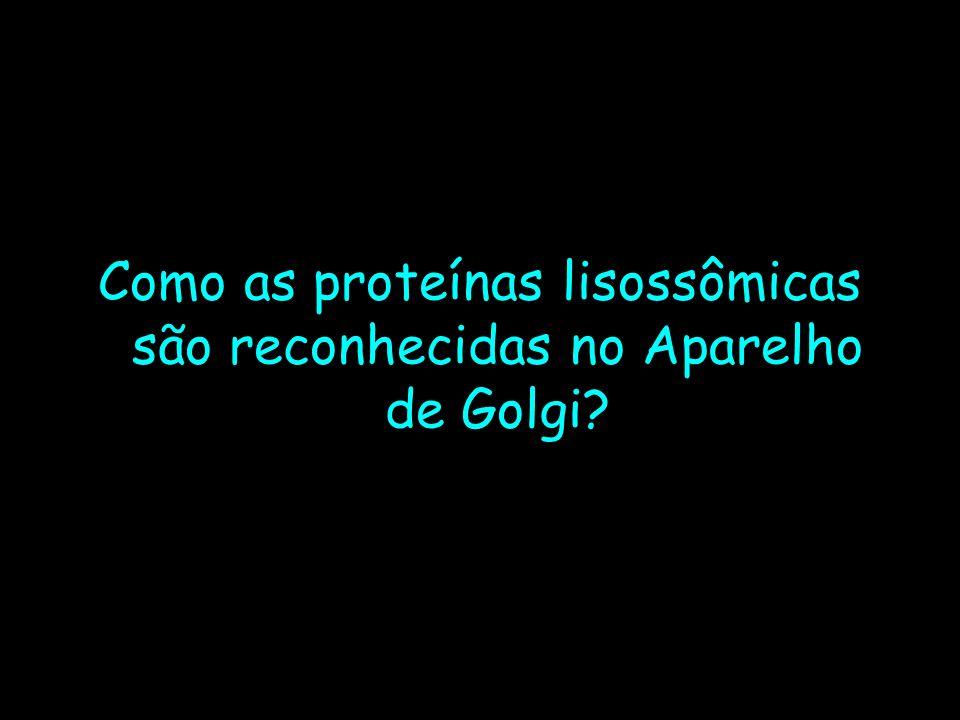 Como as proteínas lisossômicas são reconhecidas no Aparelho de Golgi