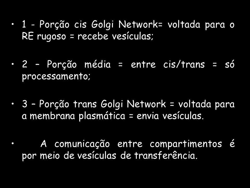 1 - Porção cis Golgi Network= voltada para o RE rugoso = recebe vesículas;