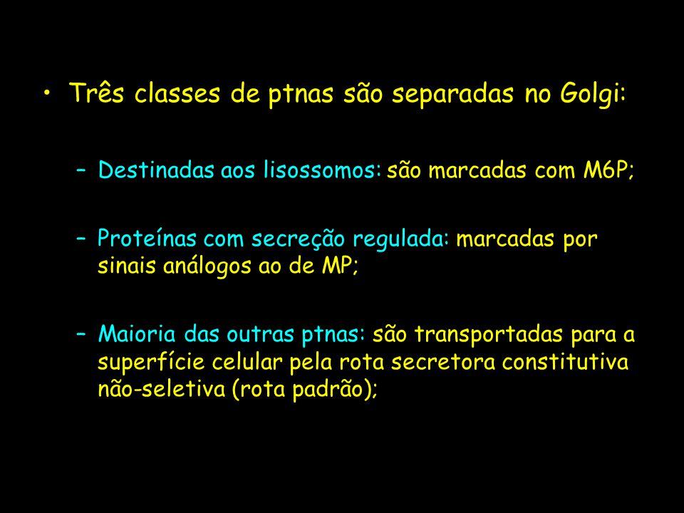 Três classes de ptnas são separadas no Golgi:
