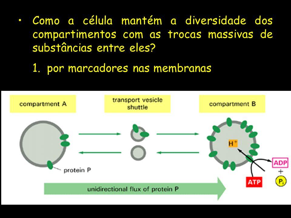 Como a célula mantém a diversidade dos compartimentos com as trocas massivas de substâncias entre eles