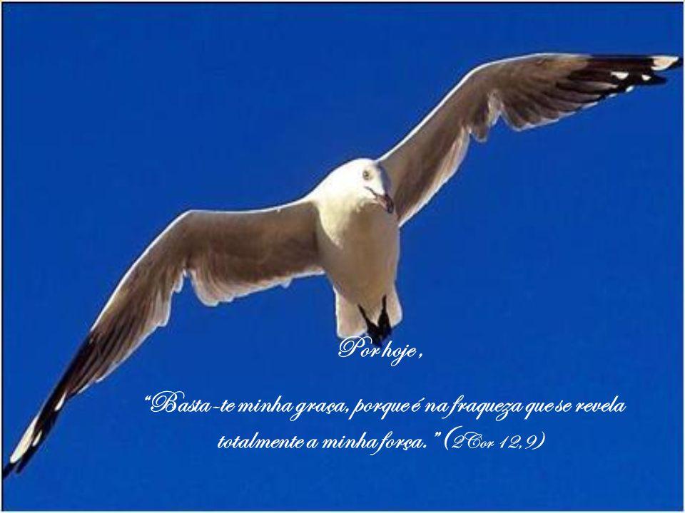 Por hoje , Basta-te minha graça, porque é na fraqueza que se revela totalmente a minha força. (2Cor 12,9)