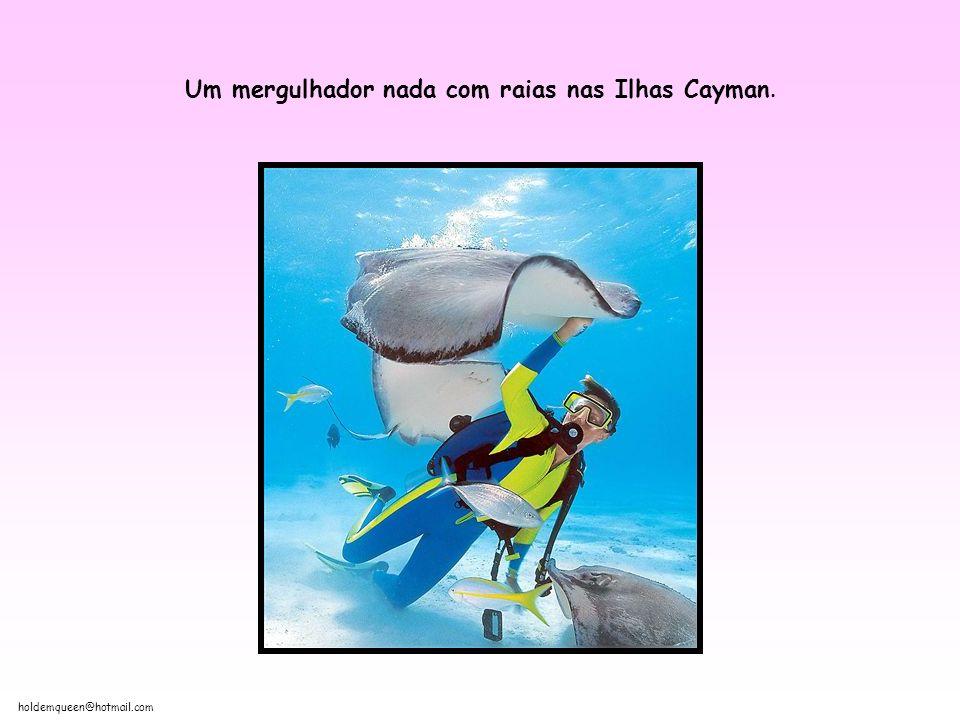 Um mergulhador nada com raias nas Ilhas Cayman.