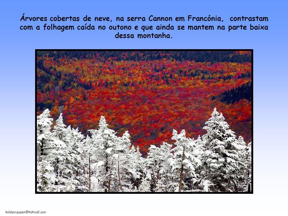 Árvores cobertas de neve, na serra Cannon em Francónia, contrastam com a folhagem caída no outono e que ainda se mantem na parte baixa dessa montanha.