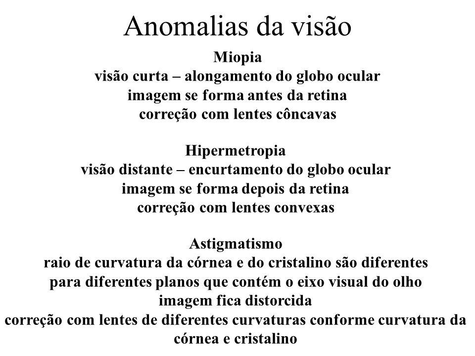 Anomalias da visão Miopia visão curta – alongamento do globo ocular imagem se forma antes da retina correção com lentes côncavas.
