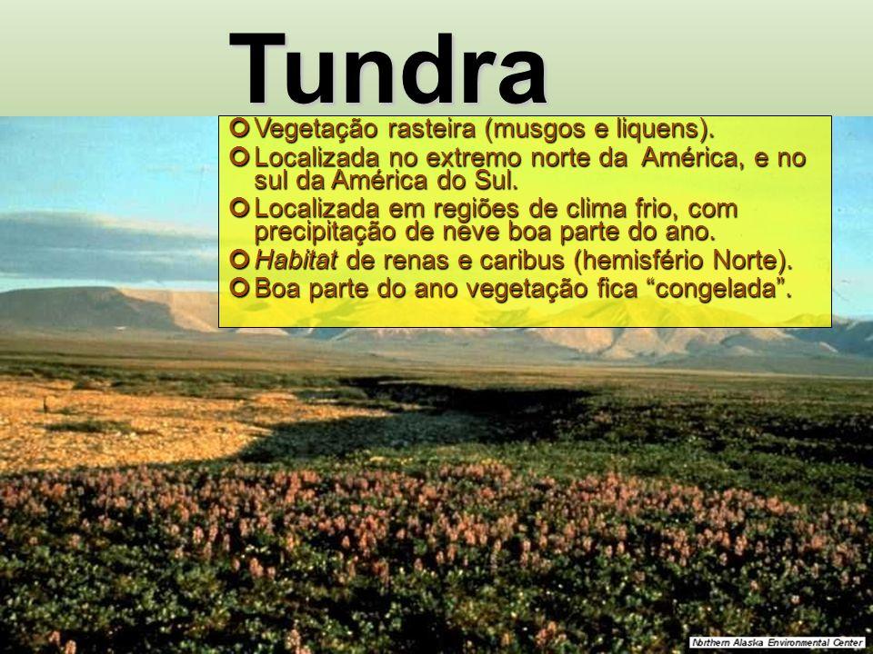 Tundra Vegetação rasteira (musgos e liquens).
