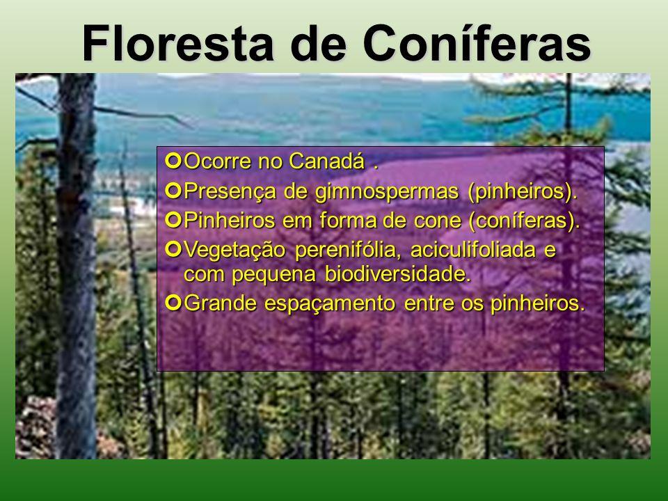 Floresta de Coníferas Ocorre no Canadá .
