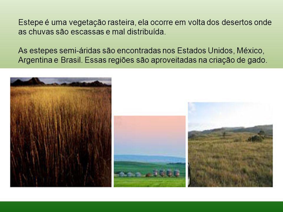 Estepe é uma vegetação rasteira, ela ocorre em volta dos desertos onde as chuvas são escassas e mal distribuída.