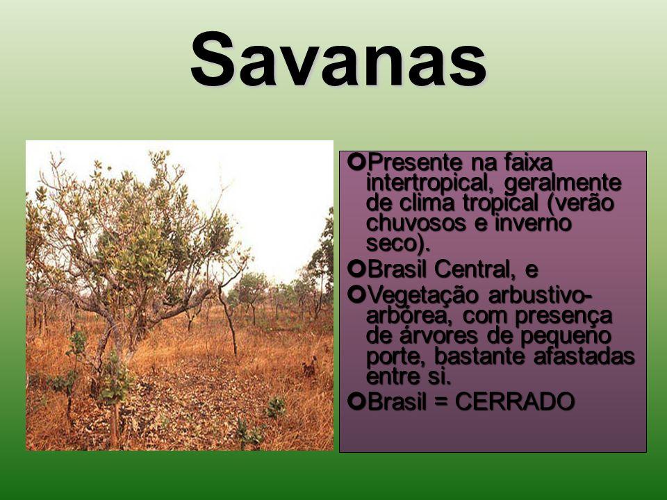 Savanas Presente na faixa intertropical, geralmente de clima tropical (verão chuvosos e inverno seco).