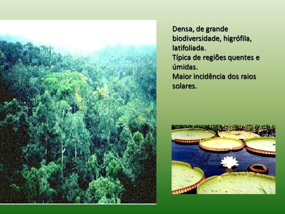 Densa, de grande biodiversidade, higrófila, latifoliada.