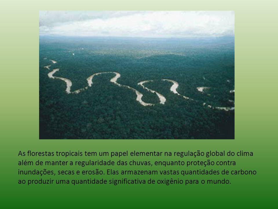 As florestas tropicais tem um papel elementar na regulação global do clima além de manter a regularidade das chuvas, enquanto proteção contra inundações, secas e erosão.