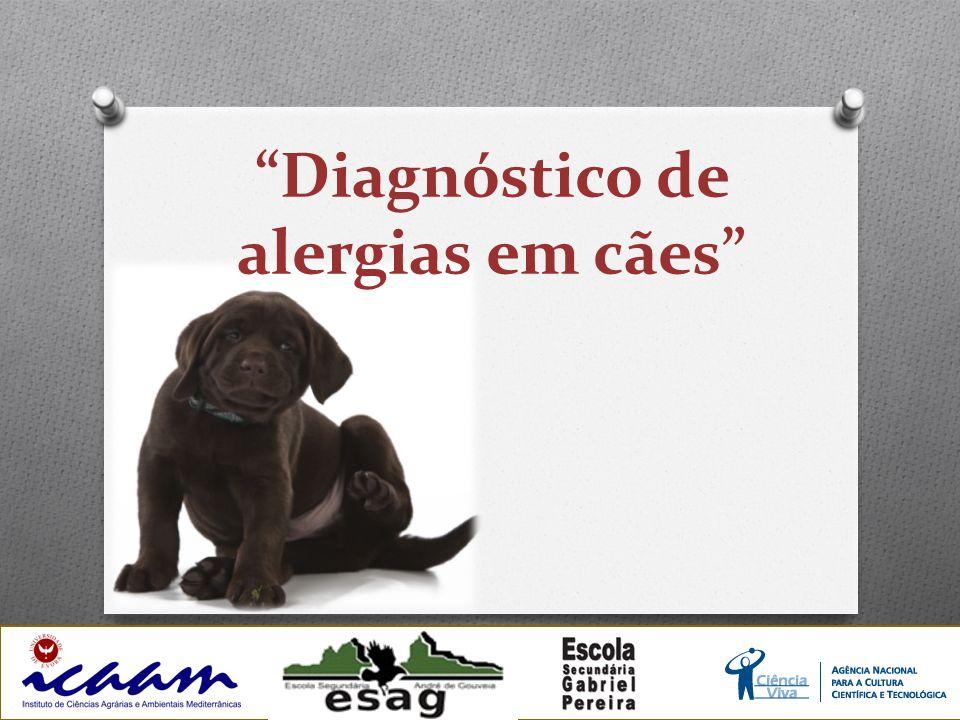 Diagnóstico de alergias em cães