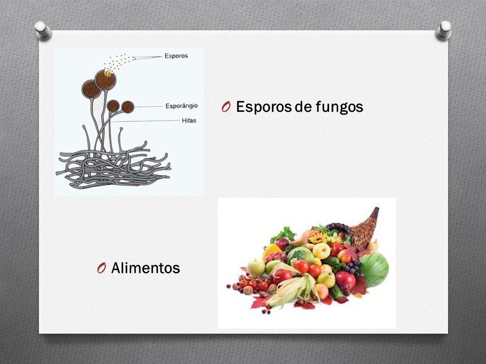 Esporos de fungos Alimentos