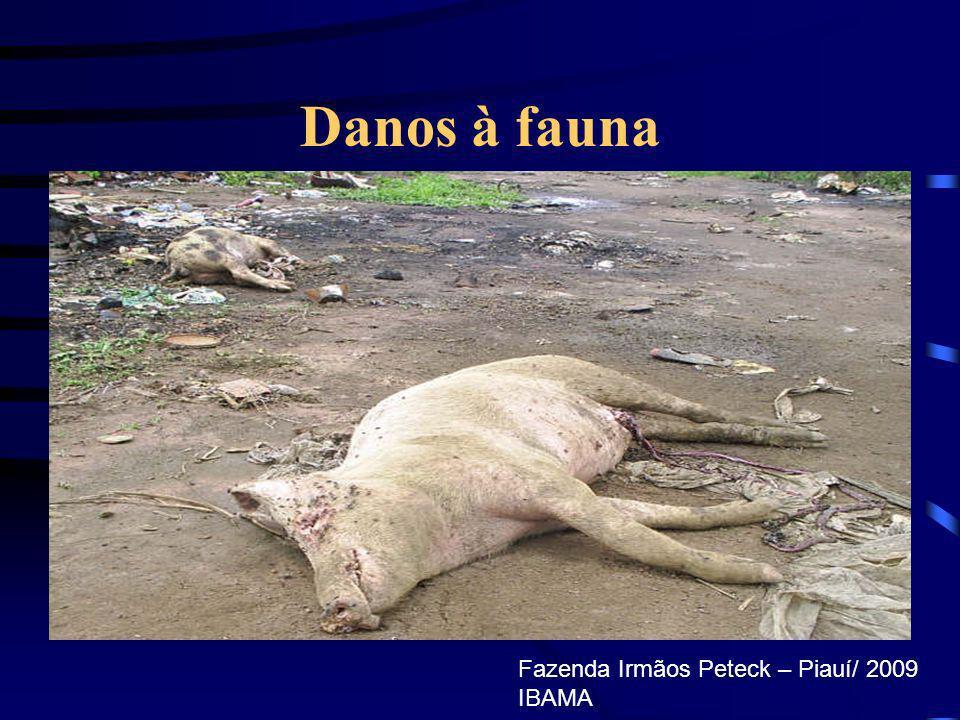 Danos à fauna Fazenda Irmãos Peteck – Piauí/ 2009 IBAMA