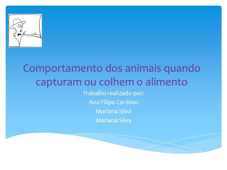 Comportamento dos animais quando capturam ou colhem o alimento