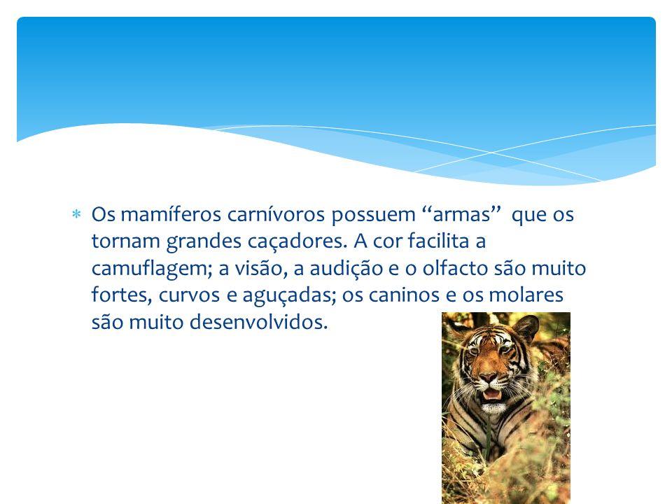 Os mamíferos carnívoros possuem armas que os tornam grandes caçadores.