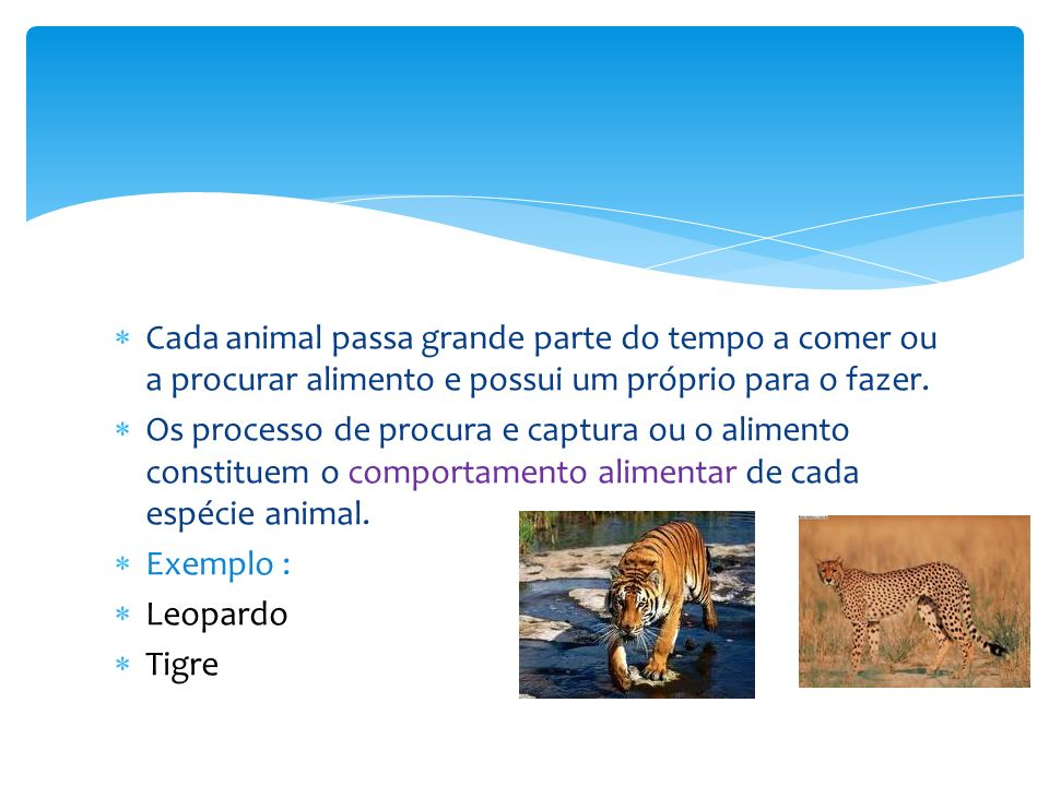 Cada animal passa grande parte do tempo a comer ou a procurar alimento e possui um próprio para o fazer.