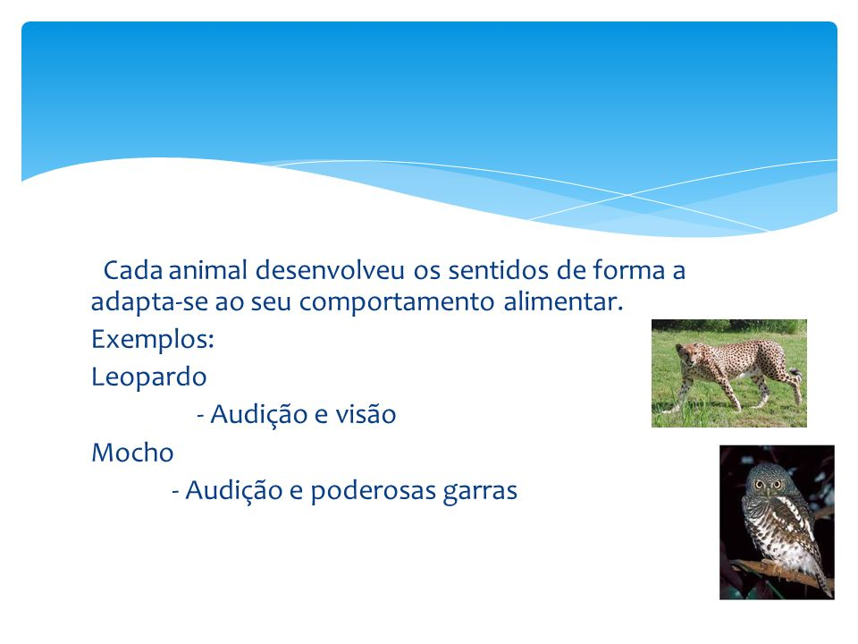 Cada animal desenvolveu os sentidos de forma a adapta-se ao seu comportamento alimentar.