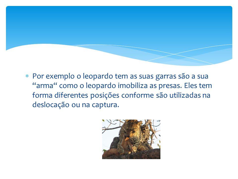 Por exemplo o leopardo tem as suas garras são a sua arma como o leopardo imobiliza as presas.