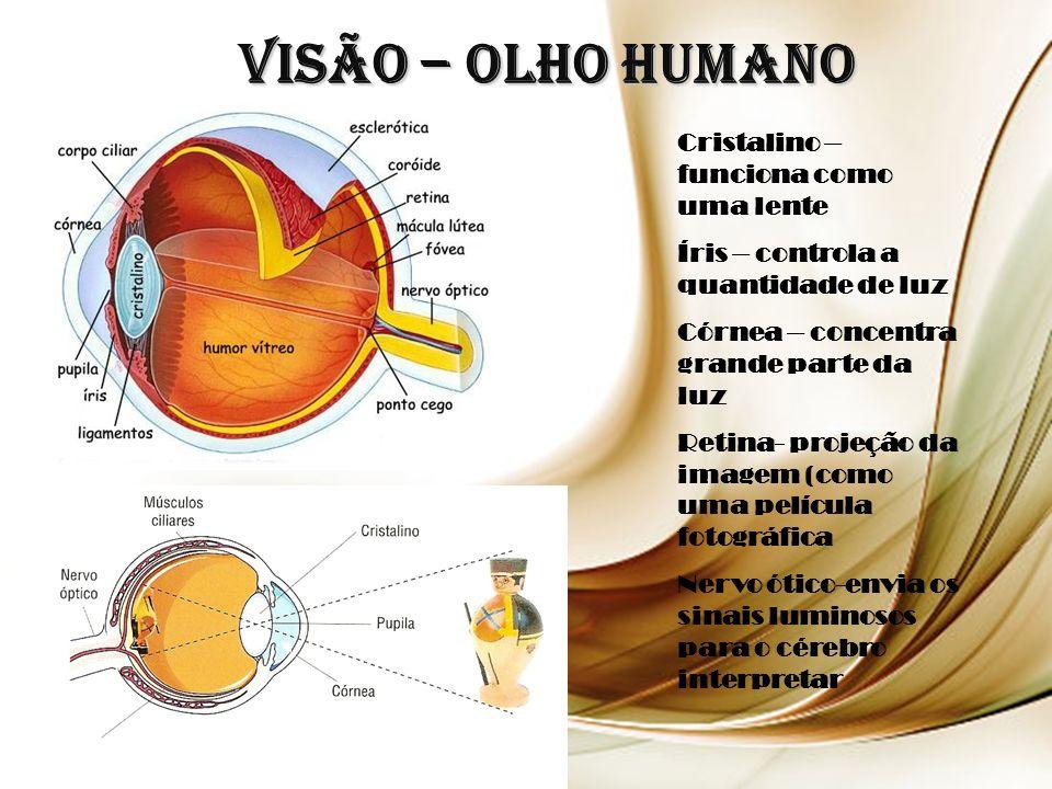 Visão – Olho Humano Cristalino – funciona como uma lente