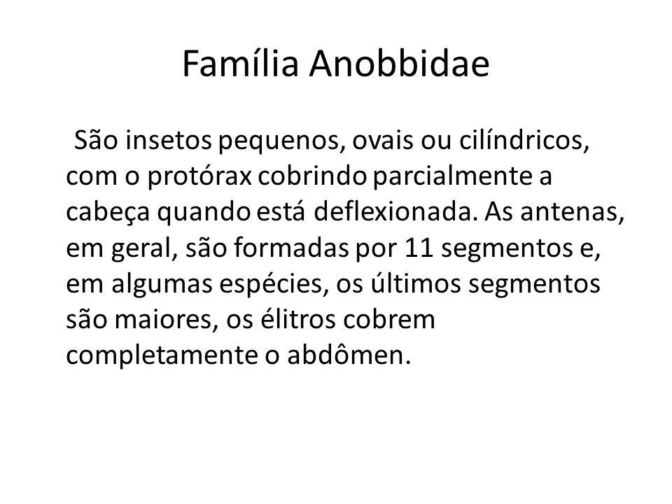 Família Anobbidae