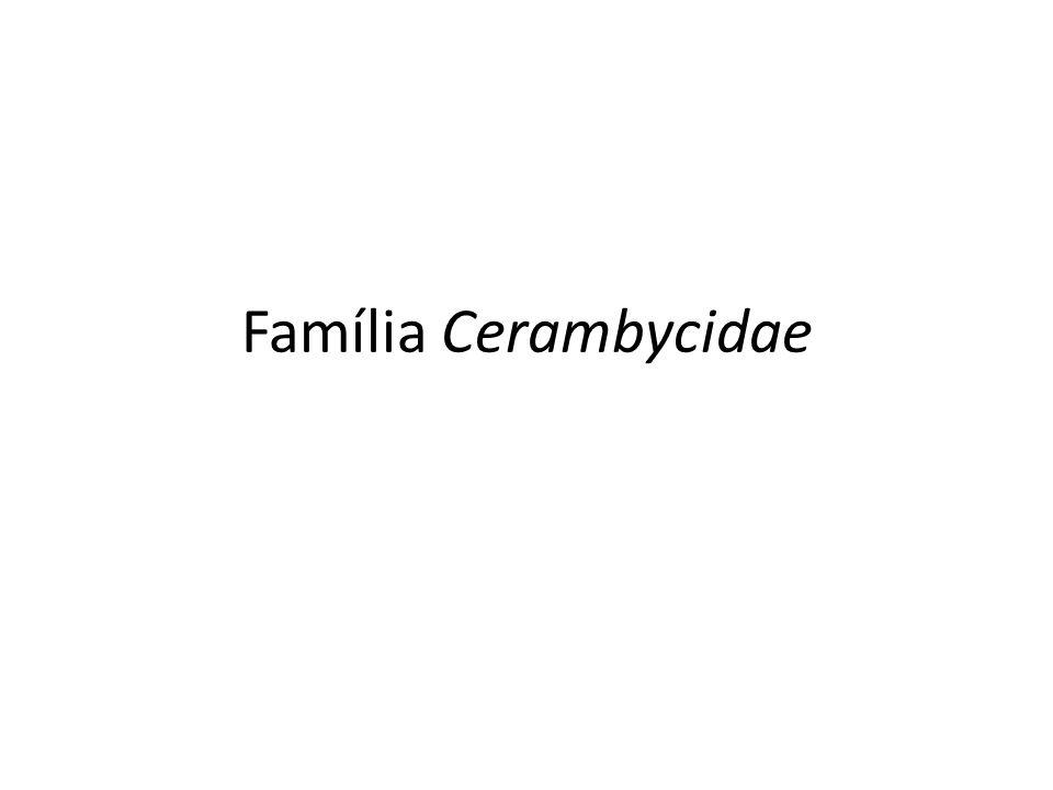 Família Cerambycidae