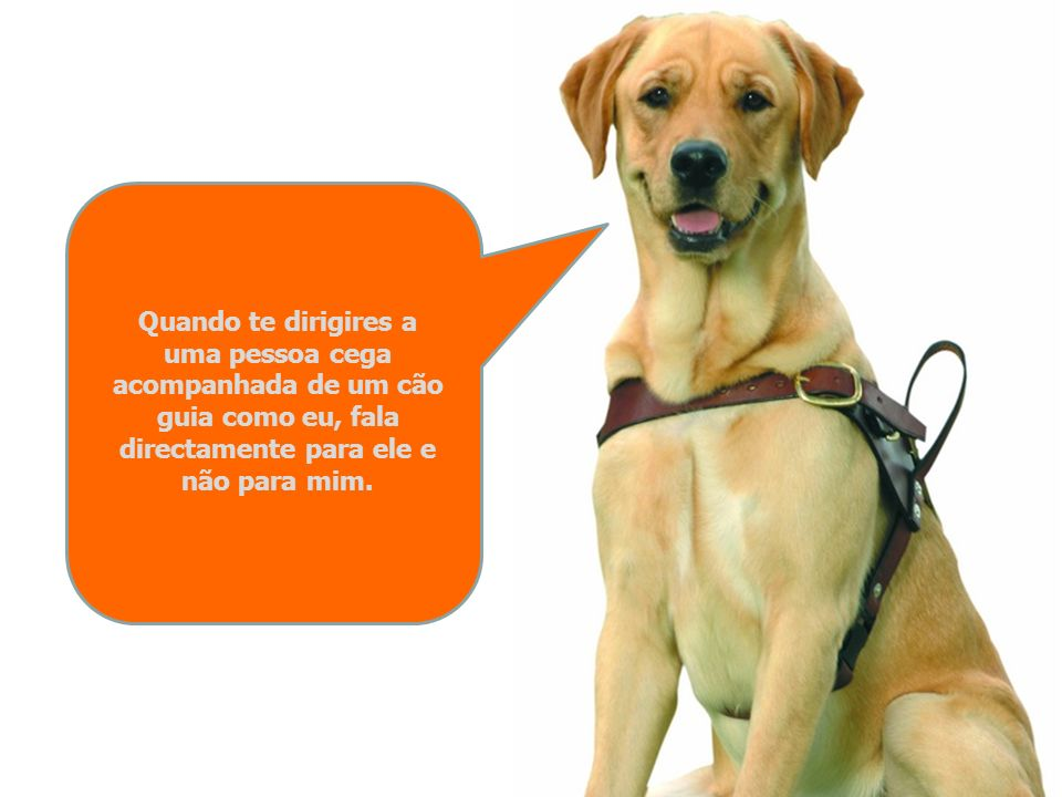 Quando te dirigires a uma pessoa cega acompanhada de um cão guia como eu, fala directamente para ele e não para mim.