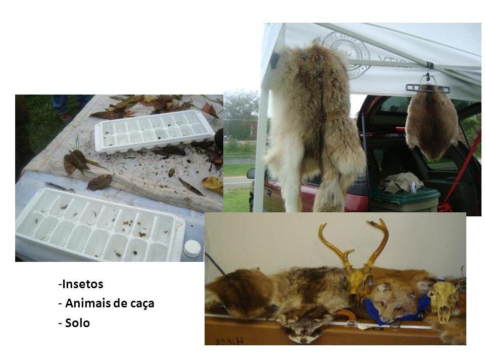 Insetos Animais de caça Solo