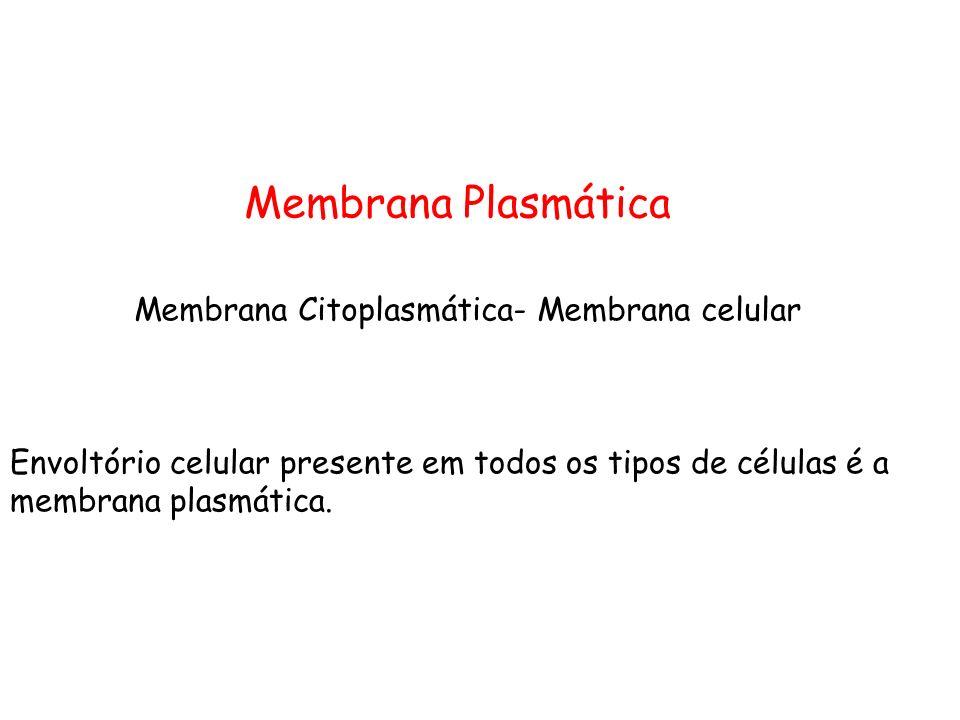 Membrana Citoplasmática- Membrana celular