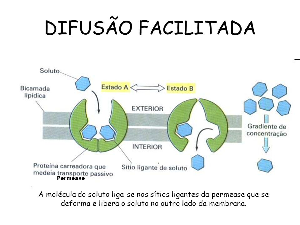 DIFUSÃO FACILITADA Permease.